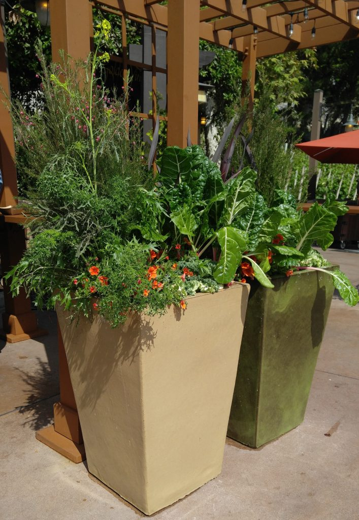 Container garden foodscaping