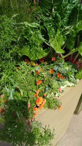 How to create amazing edible landscaping in container gardens